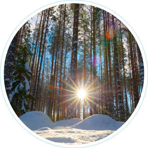 Talvinen metsämaisema, aurinko paistaa, puita kuvattu ylhäältä alaspäin kohti taivasta